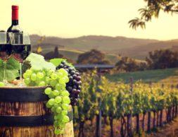krasnoie-vino-bochki-i-vinoghradnyi-sad-oboi-2048x1152-127_49