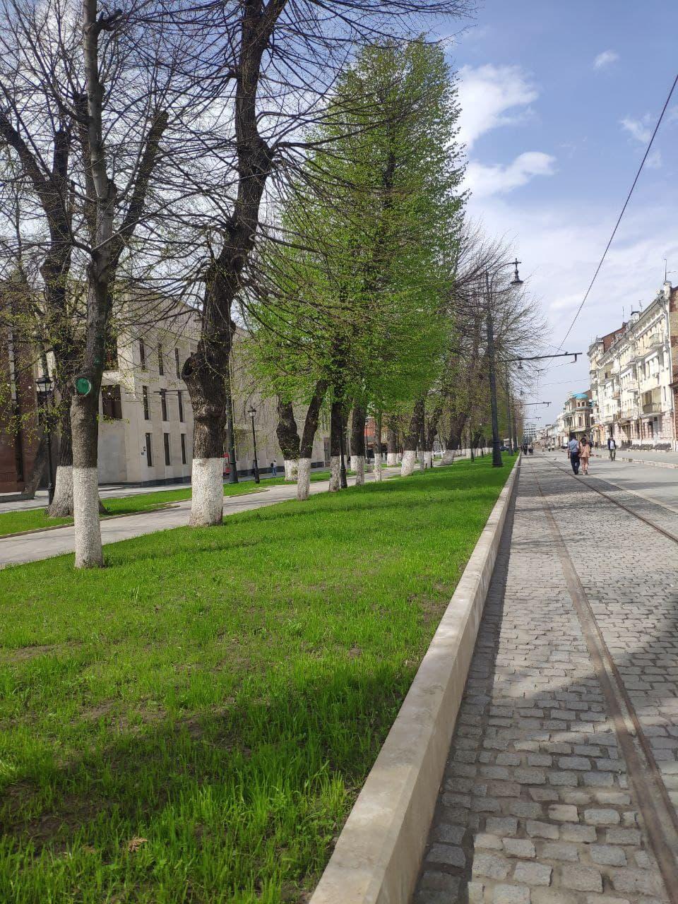 Летние цветы на улицах Владикавказа начнут высаживать в мае